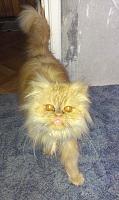 Отдам кота в добрые руки-2013-03-16-16.44.49.jpg